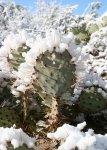 Tucson-snow-2007-4.jpg